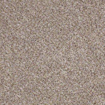 Fossil Live Big Shaw Carpet Houston
